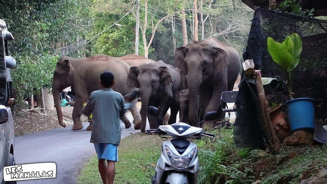lesmanalas_kao_yai_elephant_ranger