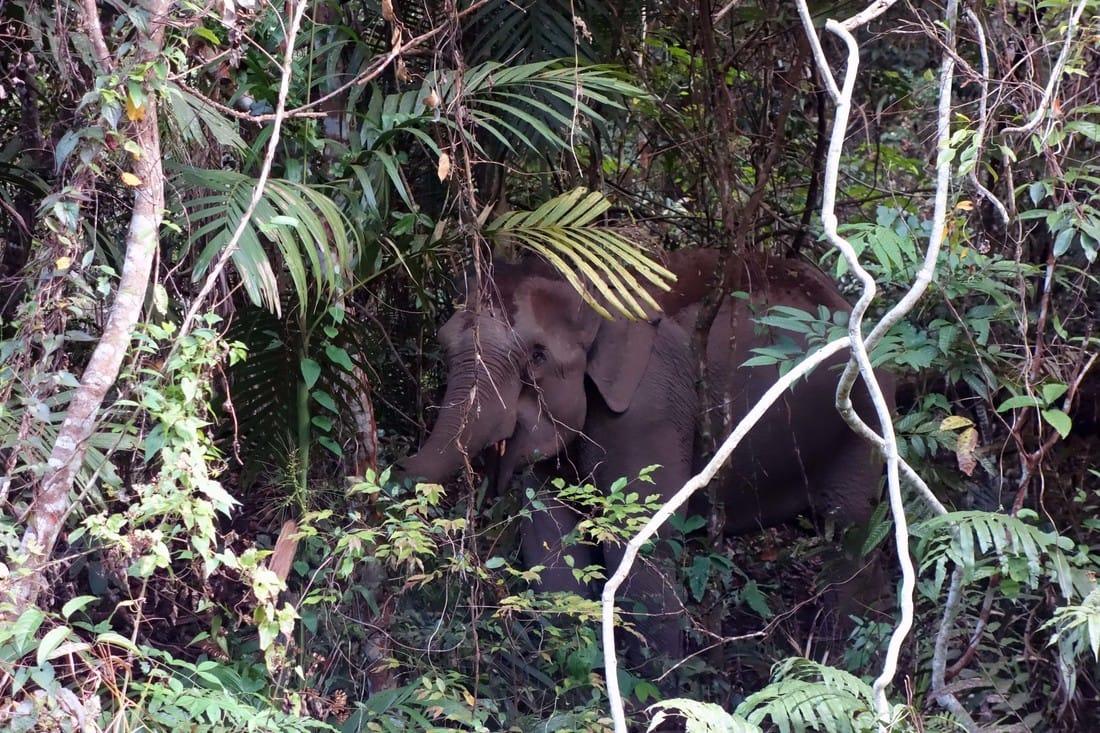 lesmanalas_kao_yai_elephant