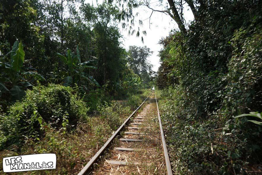 lesmanalas_bambou_train_1