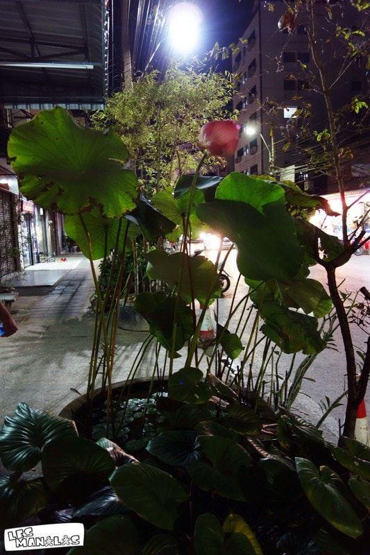 lesmanalas_lotus