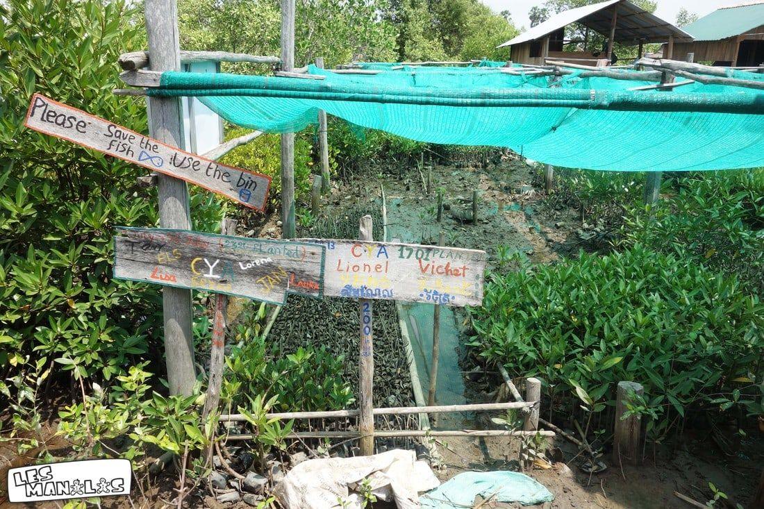 lesmanalas-mangrove-17_orig