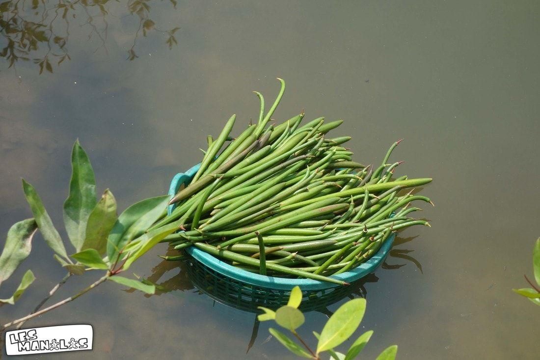 lesmanalas-mangrove-18_orig
