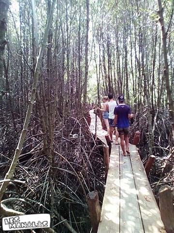 lesmanalas-mangrove-35_orig