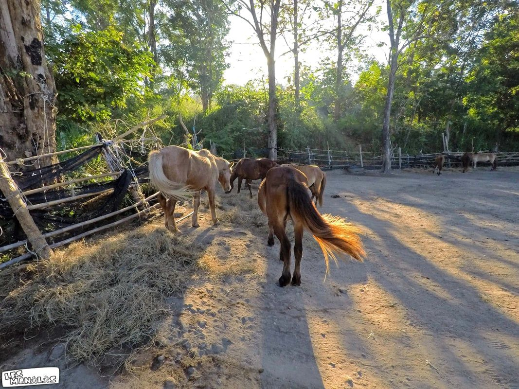 lesmanalas-ranch2_orig