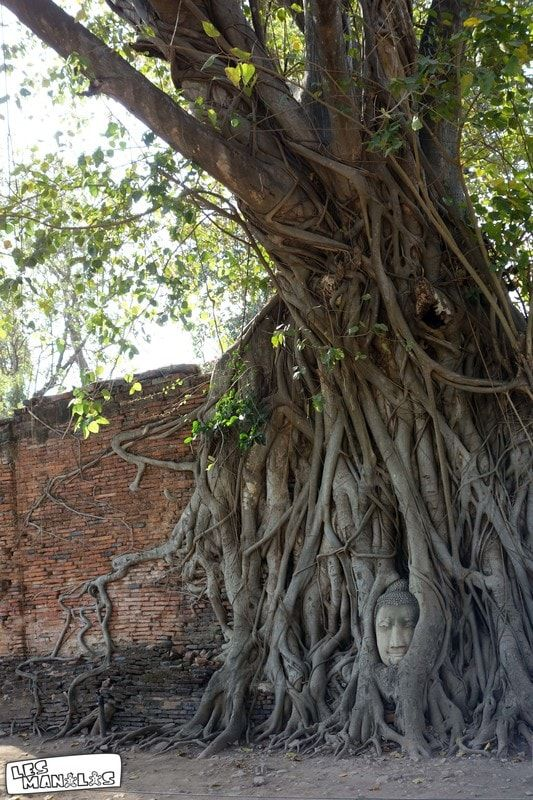 lesmanalas_ayutthaya_wat_phra_mahathat