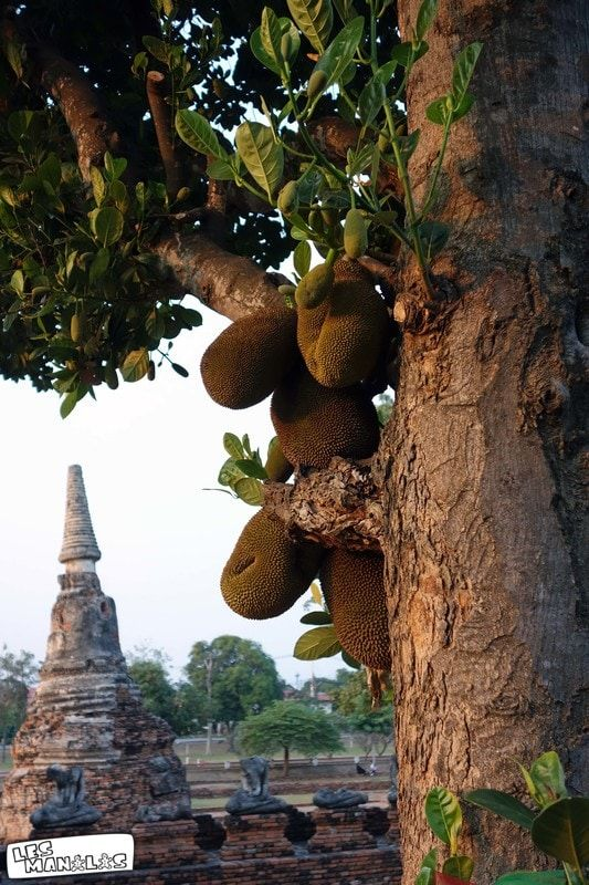 lesmanalas_ayutthaya_jaquier