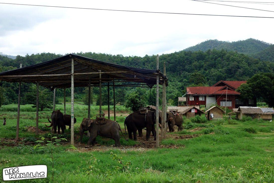 lesmanalas_elephants_chiang_mai
