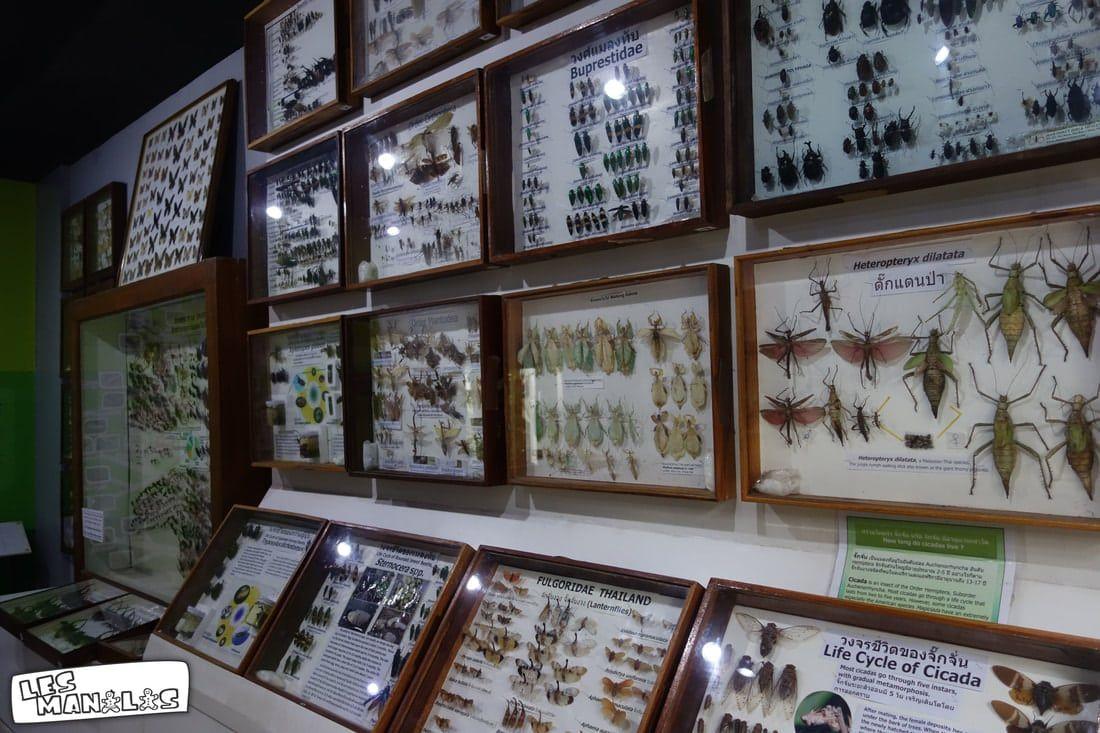 lesmanalas_insectes