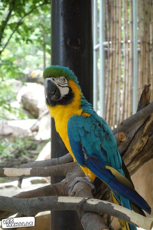 lesmanalas_parrot