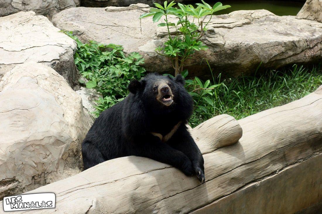 lesmanalas_ours_zoo