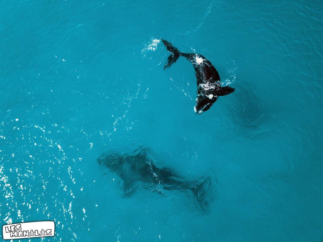 lesmanalas-baleines1_orig