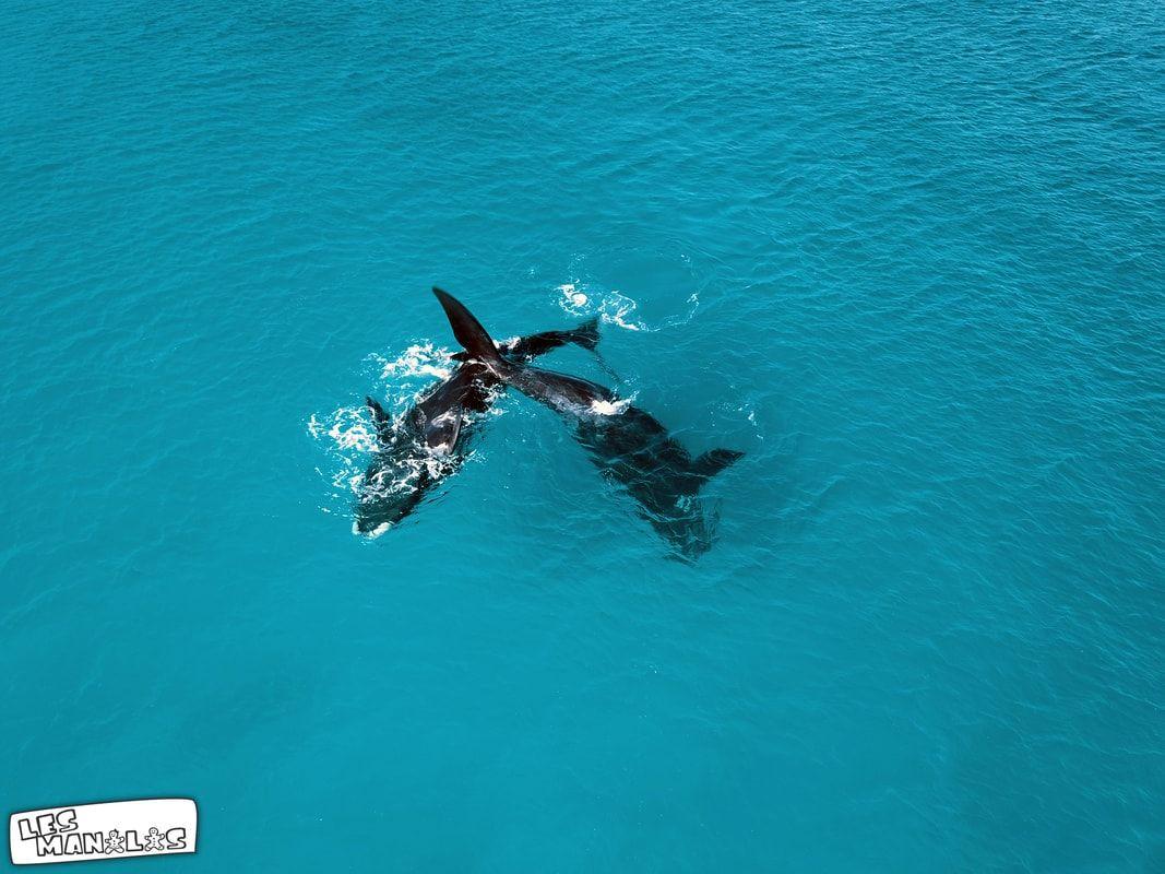 lesmanalas-baleines3_orig