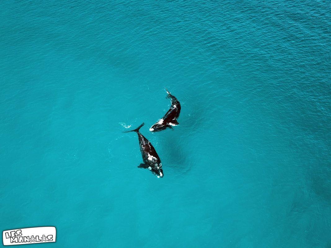 lesmanalas-baleines4_orig