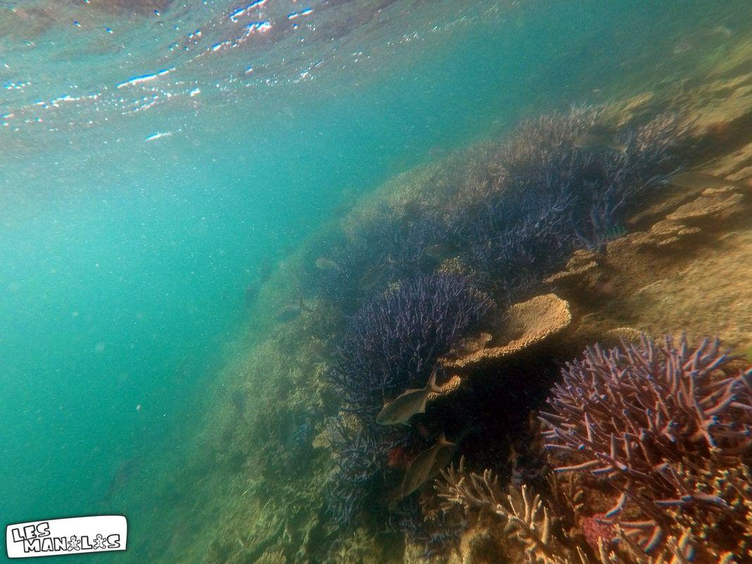 lesmanalas-snorkelling-1_orig