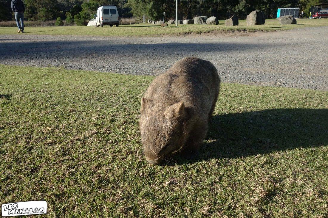 lesmanalas-kangaroovalley3_orig