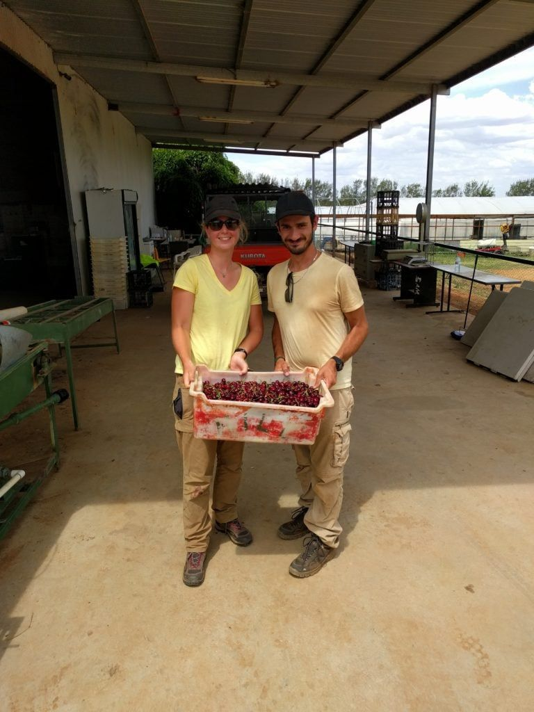 Laura et Mathieu en cueillette de cerises en Australie