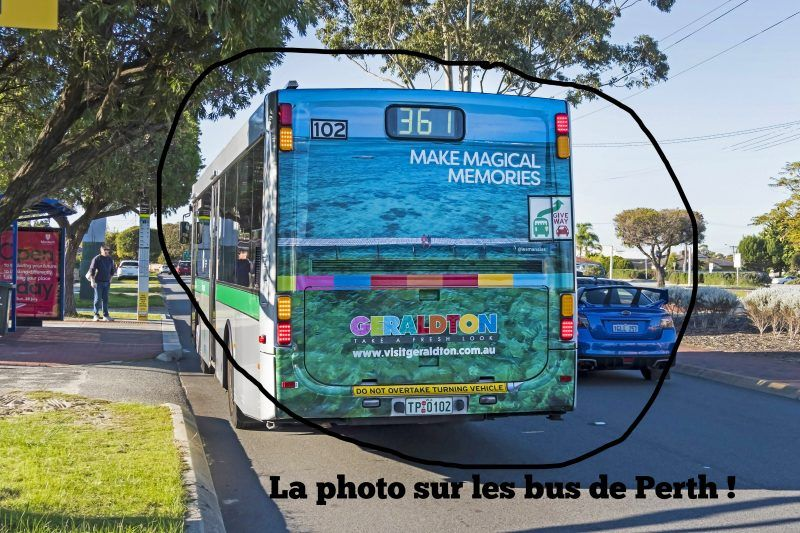 abrolhos-island-photo-nous-bus