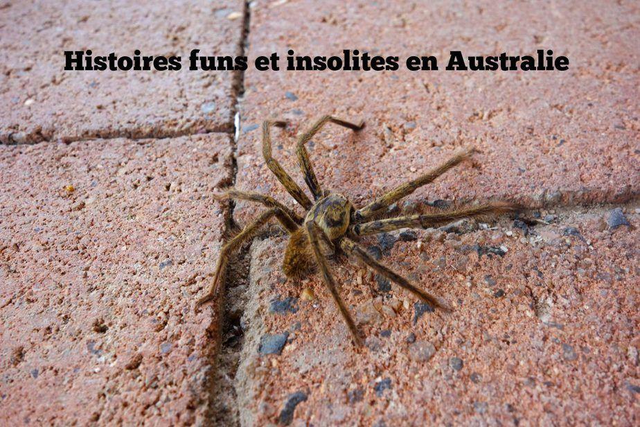 principale-fun-insolites-australie